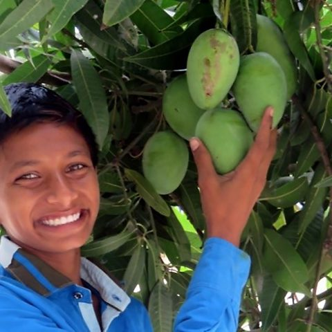A child picks a mango in the Children of Faith Garden